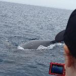 Curious whales coming right up to the boat