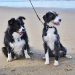 Piper & Georgie