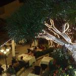 Dragoeiro Tree