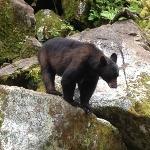 anan bear