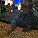 uncovering 'fossils' with the animatronic dinosaurs behind.