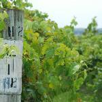More wonderful vineyards