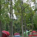 The surrounding woods