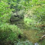 Nature Trail Walk