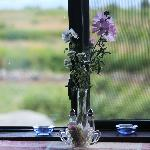 Wild flowers at the breakfast table.