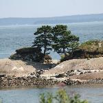 Kissing trees island