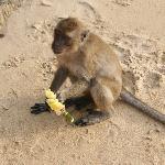 monkeybeach