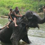 The elephant orphange