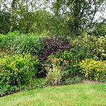 Moorland cottage plants #7