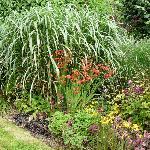 Moorland cottage plants #5