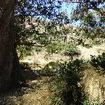 Bilde fra Scorpion Ranch Campground