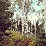 Aspens around mountain where resort is located