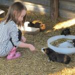 Guinea pig enclosure