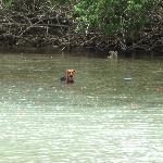 One of the dogs hangin out in the water