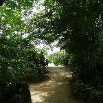 pathways leading to the beach