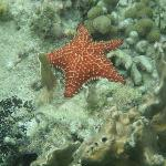 Lots of very large starfish in the bay