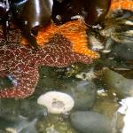 Tide pooling near by at the conservation area