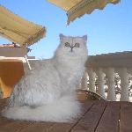 Rosa Thea nella terrazza dell'appartamento
