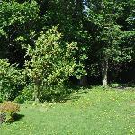 Natural woodlands at the Fir Trees