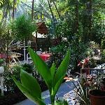 Zappia Cove Garden