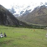 Camp under Salkantay SnowPeak