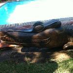 cocodrilo piscina ;)
