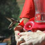 Getting as close to a Hummingbird as possible