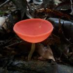 Mushroom in the surroundings