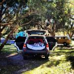her sov vi godt , under skyggen av trærene!