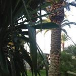 frühstück neben palmen
