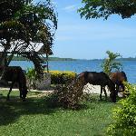 More horses roaming