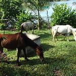 Horses roaming