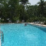 Beautiful, large pool