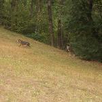 Eccoli uscire dal bosco...