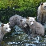 4 grizzly cubs