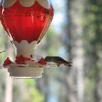 Humming Birds stopping in!