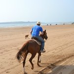 Promenade à cheval à la plage Essaouira