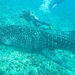 Our whale shark experience