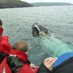 Curious whale.