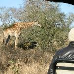 Coming very close to a giraffe in the Land Rover