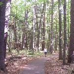 The Old Growth Pine trail