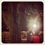 l'albero del cortile, magico , in ogni stsgione