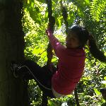 Climbing an Amazon tree while jungle-trekking