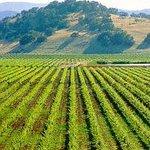 California Rivers Wine Tours Foto