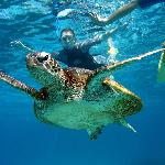 Come swim with our Amazing Green Turtles