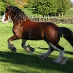 Adventure Clydesdale