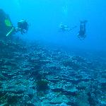 Yap diving