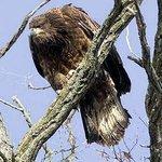 Hawk Cliff