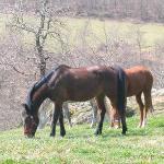 Bilde fra Maneggio Belvedere