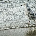 Greedy seagulls.